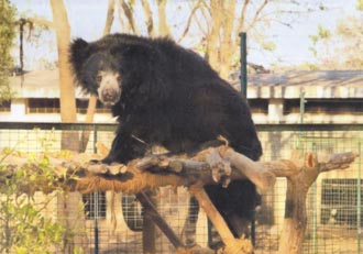 Read more about the article Free the Bears Fund